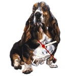 Basset Hound Shaped Clock