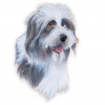 Bearded Collie Jumbo Dog Magnet