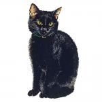 Black Cat Jumbo Magnet