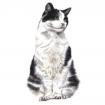 Black & White Cat Jumbo Magnet