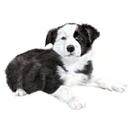 Border Collie Puppy Jumbo Dog Magnet