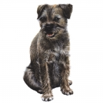 Border Terrier Jumbo Dog Magnet