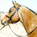 Brown Nylon Halter Bridle Combo