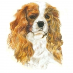Cavalier King Charles Blenheim Shaped Clock