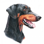 Doberman Jumbo Dog Magnet