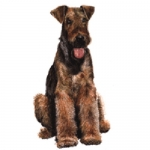 Dog Shaped Clock - Airedale