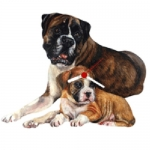 Dog Shaped Clock - Boxer with Pup