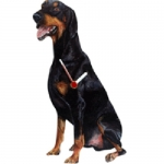 Dog Shaped Clock - Doberman