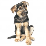 Dog Shaped Clock - German Shepherd Puppy