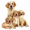 Dog Shaped Clock - Golden Retriever Puppies