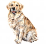 Dog Shaped Clock - Golden Retriever