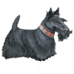 Dog Shaped Clock - Scottish Terrier