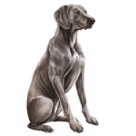 Dog Shaped Clock - Weimaraner