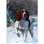 Dogs - Best Foot Forward (English Springer) - 6 pack