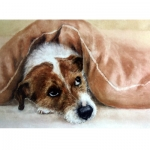 Dogs - Under the Covers (Jack Russell) - 6 pack