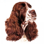 English Springer Spaniel Jumbo Dog Magnet