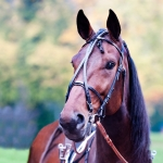 Finn-Tack Open Leather Race Bridle Complete, Elite