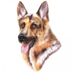 German Shepherd Jumbo Dog Magnet