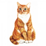 Ginger and White Cat Jumbo Magnet