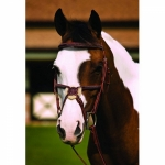 HDR Fancy Square Raised Padded Figure 8 Bridle w/Laced Reins - OAKBARK, OVERSIZED