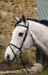 HDR Padded Dressage Bridle With Flash And Web Reins