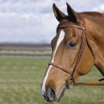 HDR PRO Fancy Raised Pony Bridle with Lace Reins