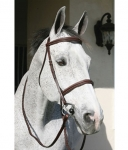 HDR Pro Plain Raised Padded Bridle