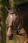 HDR Raised/padded Dressage Bridle W/jawband