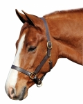 Henri De Rivel Advantage Padded Leather Halter