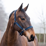 Horze Edinburgh Royal Equus Halter and Lead Set
