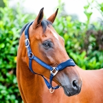 Horze Exclusive halter, nylon with fleece