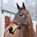 Horze Justin Halter with Large Padded Nose Band