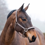 Horze Royal Equus Neoprene Lined Halter