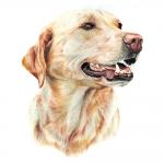 Labrador Retriever Yellow Jumbo Dog Magnet