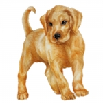 Labrador Retriever Yellow Puppy Jumbo Dog Magnet
