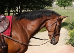 Nunn Finer Nylon Side Reins with Elastic