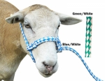 Poly Sheep Halter
