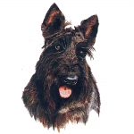 Scottish Terrier Jumbo Dog Magnet
