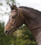 Shires Equestrian James Sterling Exeter Bridle
