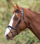 Shires James Sterling Devon Dressage Bridle