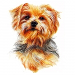 Yorkshire Terrier Jumbo Dog Magnet